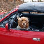 Todo lo que necesitas saber para viajar con tus mascotas por Europa
